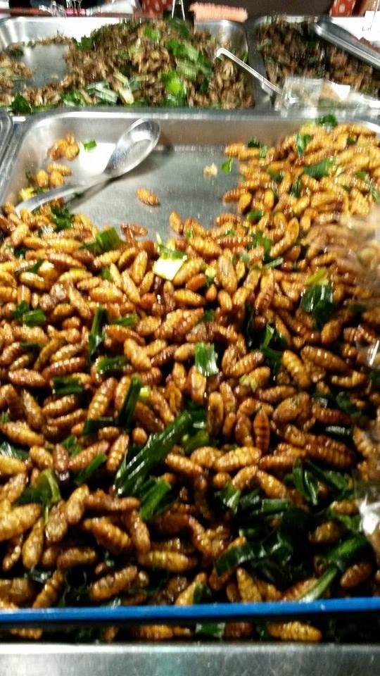 bangkok insects 1