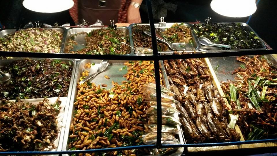 bangkok insects3